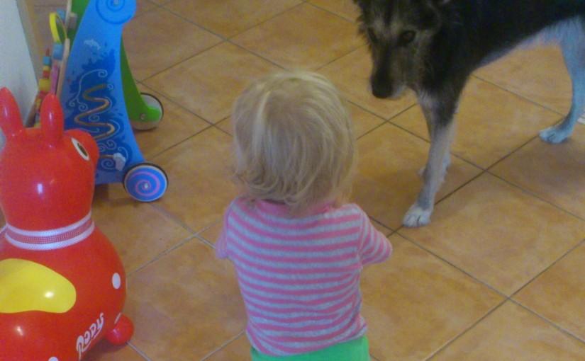 Regeln im Umgang zwischen Kleinkind und Hund