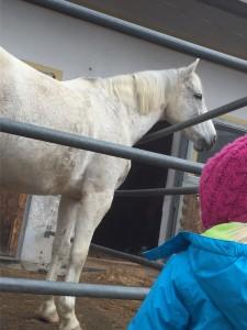 """Das Pferd """"Sabrina"""" von Bibi? ;-)"""