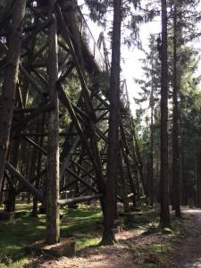 Für ein kurzes Stück mussten wir den Baumkronenweg verlassen und wieder auf dem Boden zurückkehren...