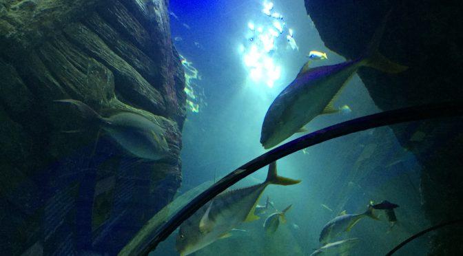 Sea Life München – Ausflugsziel für Kinder