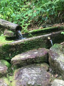 Bayerischer Wald Quelle
