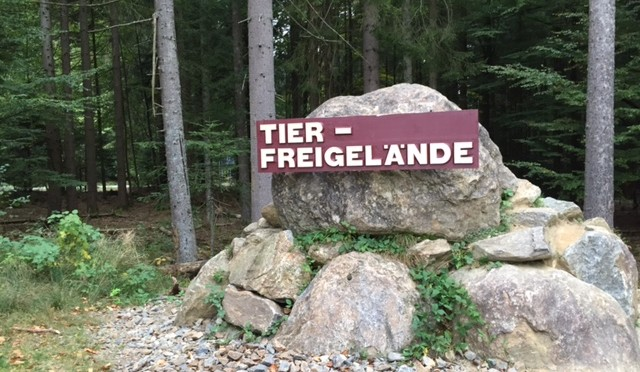 Big Day im Nationalpark Bayerischer Wald – #goretexbigdays