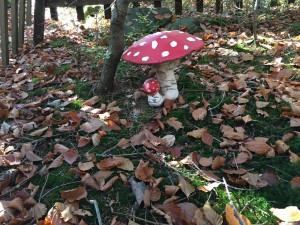 Magische Pilze