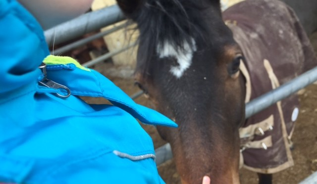 GORE TEX BIG DAYS: Auf dem Pferdehof
