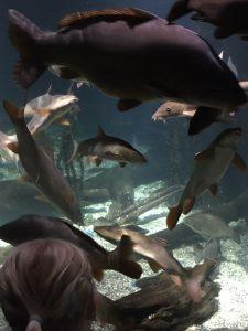 Sea life, Sea life münchen, kinderausflug, unterwasserwelt, fische, meeresbewohner, sea life für kinder, München für kinder