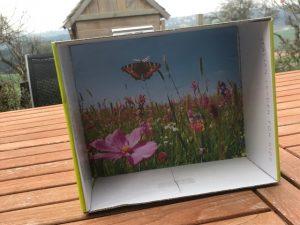 Magnet, Schmetterlingsbox