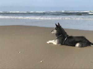 Urlaub auf Texel mit Hund