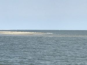 Urlaub auf Texel Robbenfahrt