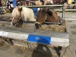 Urlaub auf Texel Ponyreiten mit Kinder