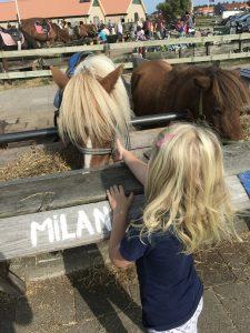 Urlaub auf Texel Ponyreiten für Kinder