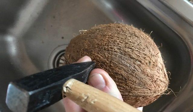 Vogelfutterhaus mit Kindern bauen: Bastelspaß mit einer Kokosnuss